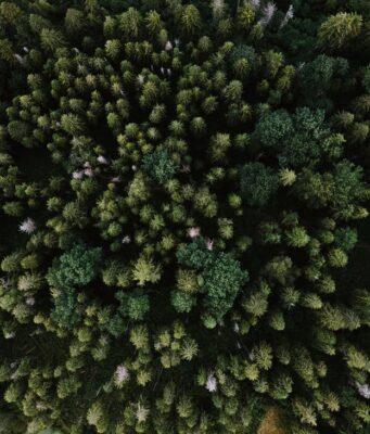 Карпати (джерело Pexels.com)