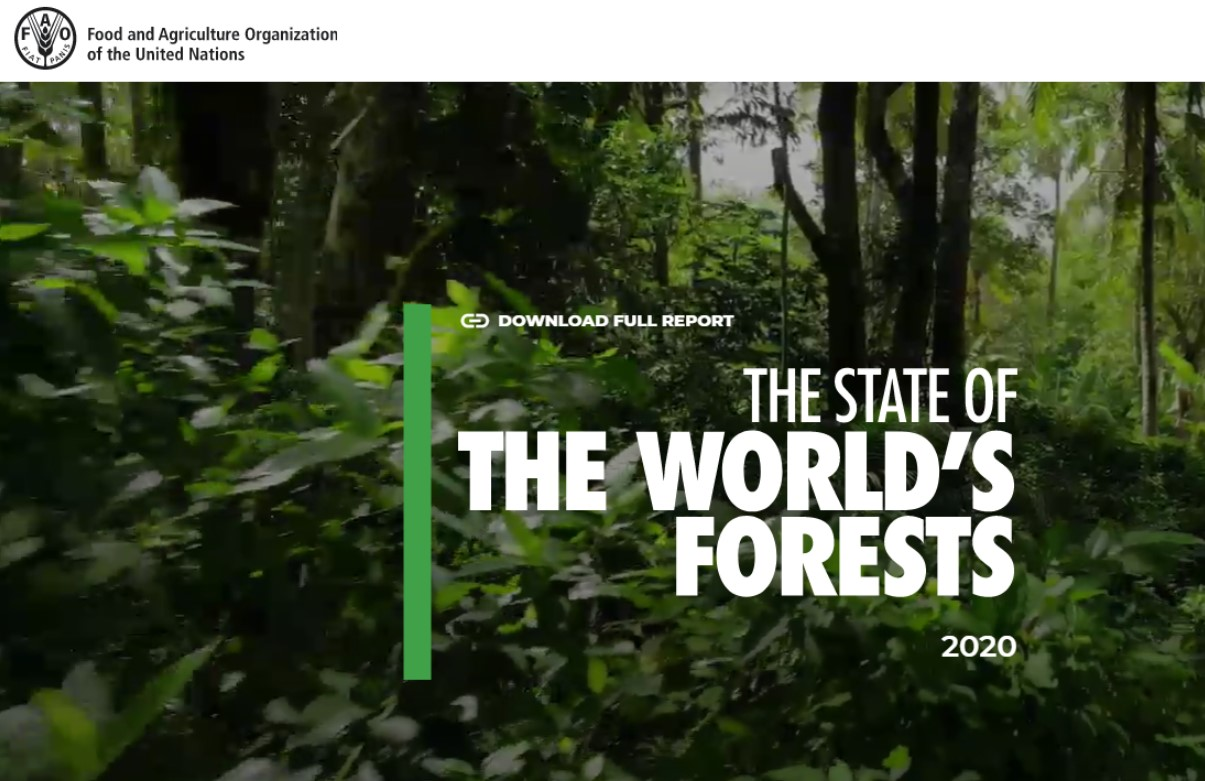 Звіт FAO про ліси